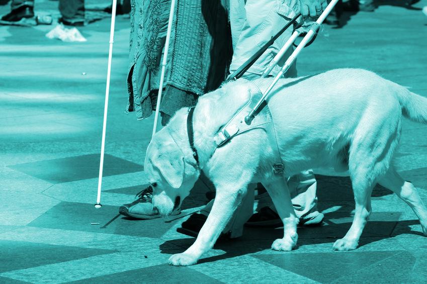 Fotoband, blindgeleide hond aan het werk
