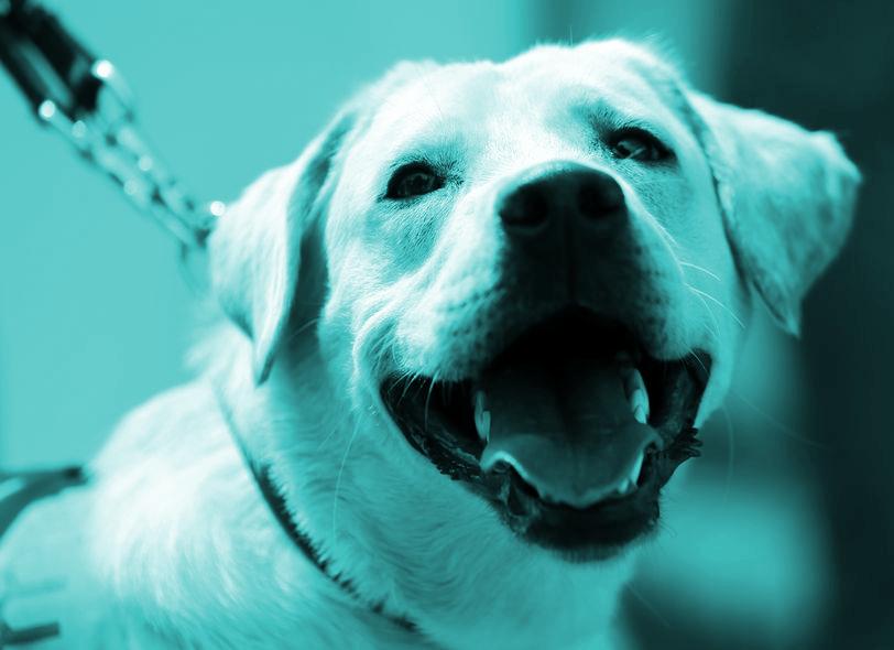 Fotoband, Blindgeleide hond